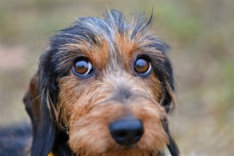 Do Dogs Have Multiple Sets of Eyelids? - Petsoid