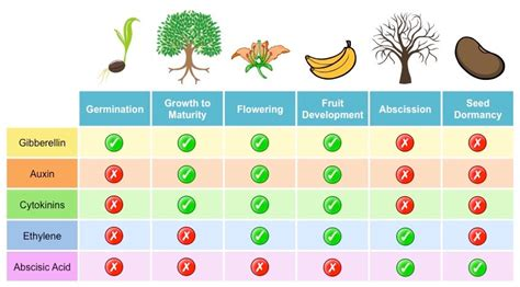 Plant hormones (types and functions) - Online Science Notes
