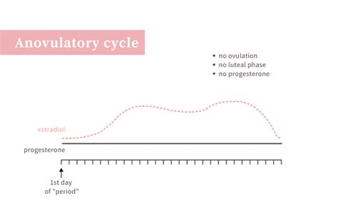 Ovulation Is the Main Event of the Menstrual Cycle