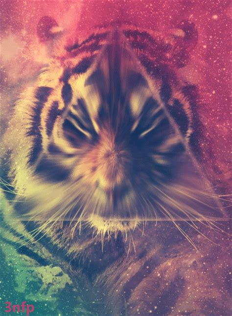 Tiger Gif Pictures, Photos, and Images for Facebook