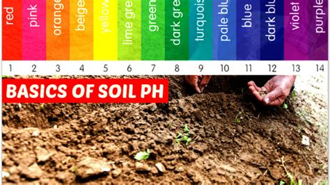 What is Soil pH: This Is Why Soil pH is Important For Your
