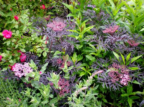 Gardening With Grace: Favorite Plants--Foliage