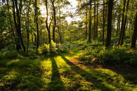 What is Forest Bathing? Introducing Wellness Trend