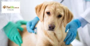 5 Common Signs of Cancer in Dogs - Paw Life