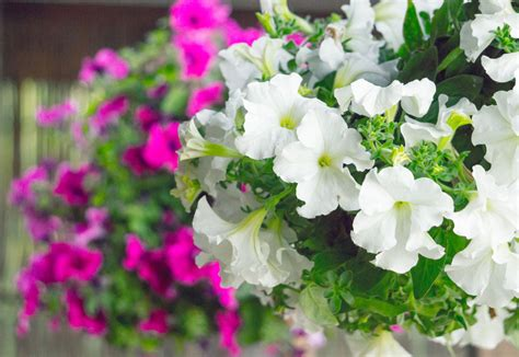 Fab Tips on Shrub Identification: Evergreen and Flowering