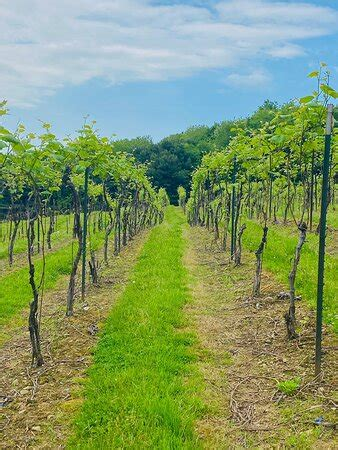 Ugly Bunny Winery (Loudonville) - 2020 All You Need to